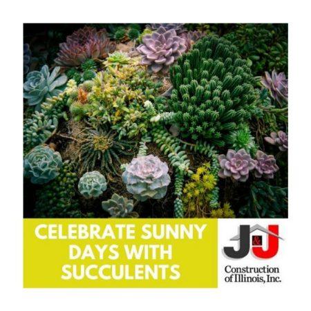 Celebrate Sunny Days With Succulents - J&J Construction